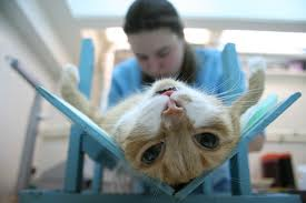 Кастрация котов цена тюмень
